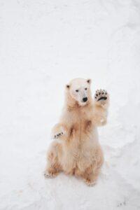 DAS for bear detection